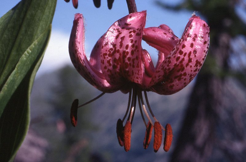 знаменитость появилась картинки редких исчезающих растений награды